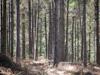 Forest Walking.